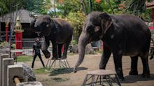 Thailand Zoo Elephants Forced to Perform Tricks Moved to Sanctuary: 'We Believe in the Healing'