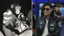 No, Corey Feldman did not bring Michael Jackson's chimp Bubbles to the set of 'The Burbs'