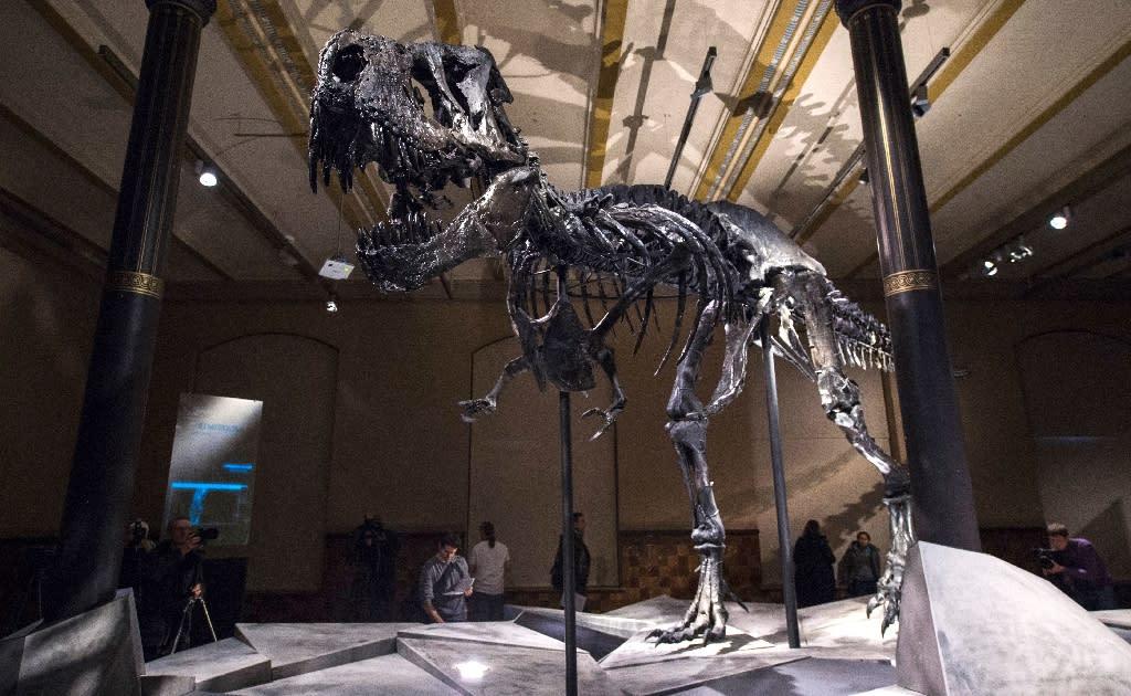 The Tyrannosaurus Rex had a fearsome bite