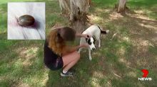Pet owner's warning after dog dies from tick paralysis
