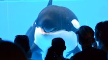 SeaWorld Entertainment stock hits lowest price since going public