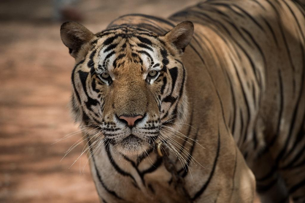 Sixth mass extinction is here: US study