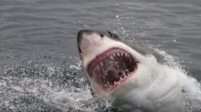 Surfer fights off great white shark by punching it and telling it to 'f**k off'