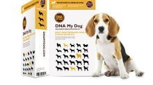 Want to unravel the mystery of your mutt? Doggie DNA kits are $20 off