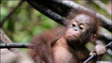 Weltbiodiversitätsrat berät in Kolumbien über bedrohte Artenvielfalt