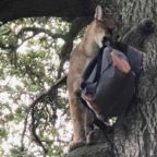 Brave Dad Saves His Son From a Mountain Lion