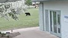 Wisconsin Police Warn Public to Beware of Roaming Black Bear