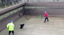 Hilarious footage shows fox giving rescuers the runaround after getting stuck in sewage treatment works
