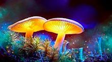Psychedelics, the Next Frontier in Drug Research -- CFN Media