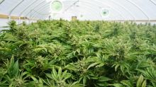 Marijuana REIT Innovative Industrial's Turbocharged Growth Continues