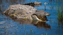 Australie : araignée géante, crocodiles... les inondations font apparaître des animaux effrayants