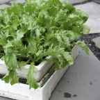Start now to get another growing season out of your garden