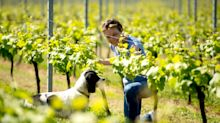 Ex-City workers in search of 'the good life' are driving the English wine boom