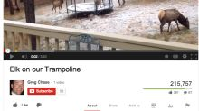 Couple Captures Video of Elk Using Backyard Trampoline