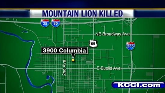 Police shoot mountain lion in back yard