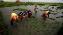 Asia Rice: India prices slip for third straight week on slow demand