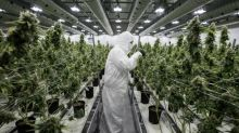 As Canada awaits, Uruguay's legal cannabis project provides benchmark