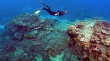 Coral reefs at risk of dissolving as oceans get more acidic: study