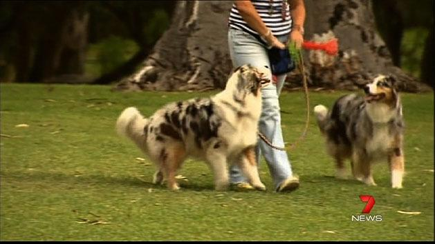 Dogfight over leashes in parks