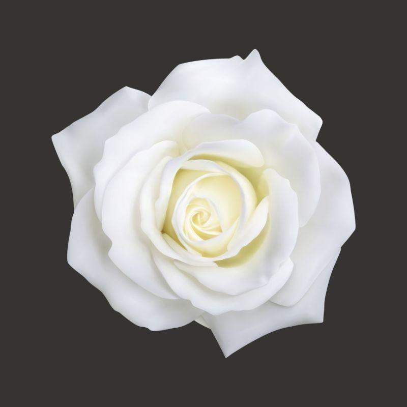 wei e rosen werden bei der grammyverleihung am wochenende eine versteckte bedeutung haben. Black Bedroom Furniture Sets. Home Design Ideas
