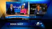 2 dogs shot with pellet guns; police looking for suspect
