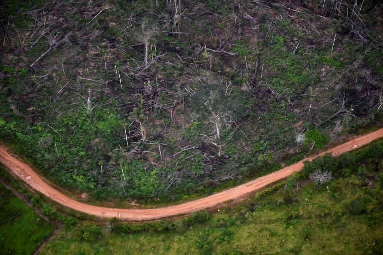 Nature loss means deadlier future pandemics, UN warns