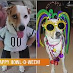 Happy Howl-O-Ween: Oct. 19, 2020