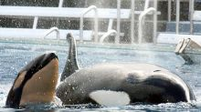 SEC fines SeaWorld, former CEO for not disclosing the harm from the movie Blackfish