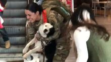 Dog's unbridled joy for soldier's homecoming goes viral, brings smiles