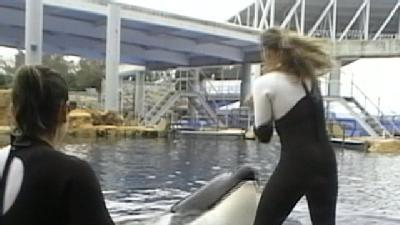 Officials Release 911 Calls In SeaWorld Attack