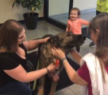See the Moment German Shepherd Is Reunited With Family After He Was Mistakenly Flown to Japan