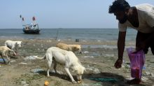 Isle of dogs: Pakistan fishermen feed islands full of strays