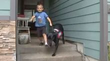 Dog's hidden talent helps out child, 6, with coeliac disease
