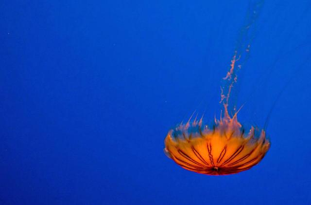 Jellyfish-inspired e-skin glows when it's in 'pain'