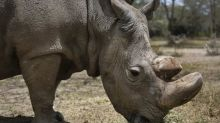 Last male Northern White rhino dies at age 45
