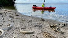 'Gut-wrenching': Kayakers shocked after finding 'graveyard' on island