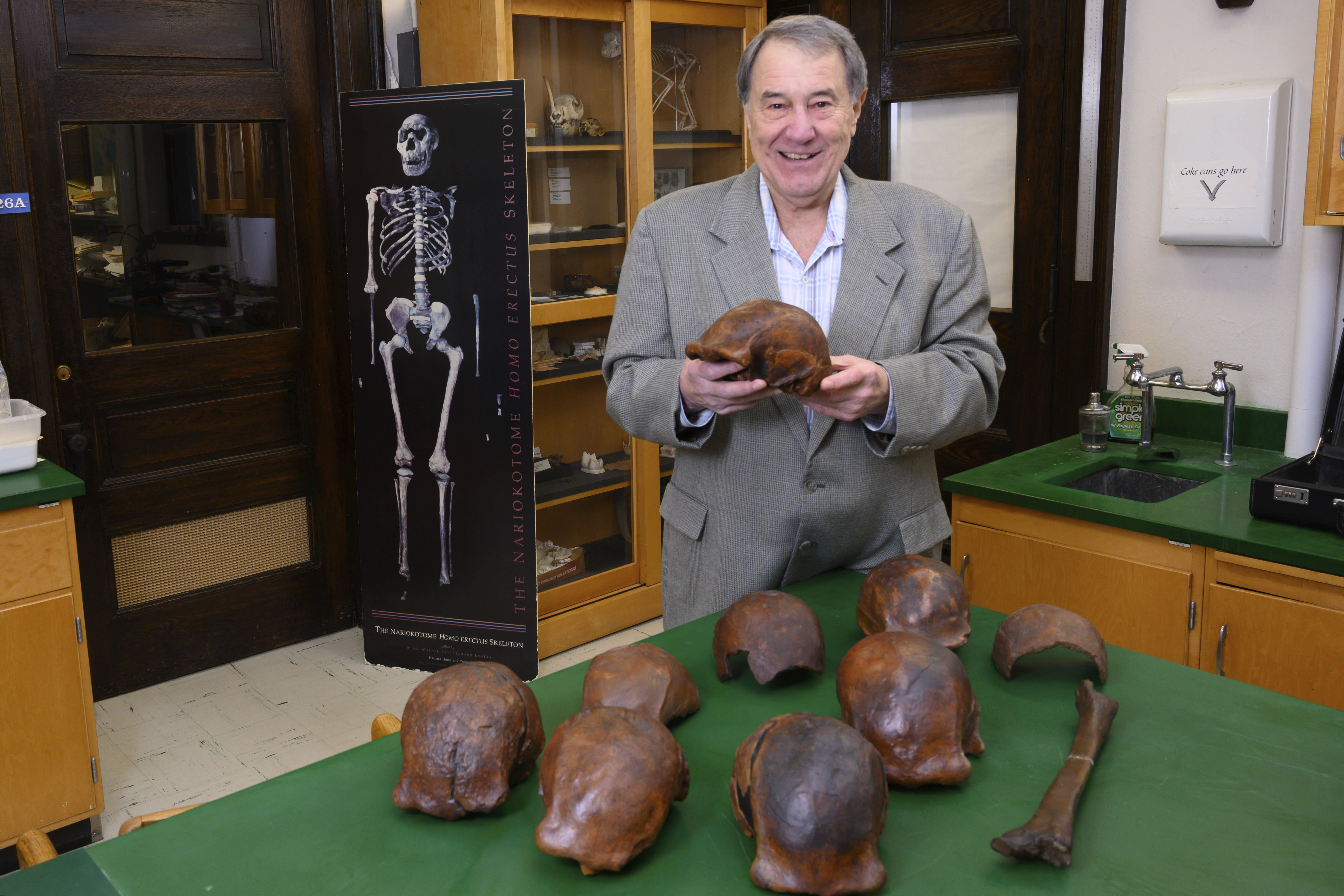 Homo erectus may have been wiped out by climate change, scientists say