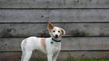 Mulher afirma tomar xixi de cachorro para combater acnes e depressão