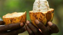 U.S. Supreme Court rules for Nestle, Cargill over slavery lawsuit