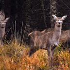 Woman Mistaken For Deer And Shot Dead While Walking Her Dogs: Report