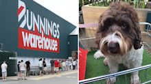 Bunnings store introduces new trolley feature for dogs