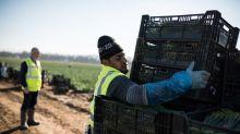 Großbritannien: Dann sollen wohl Roboter die Arbeit machen
