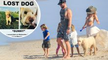Chris Hemsworth's missing dog sparks Byron bay-wide search