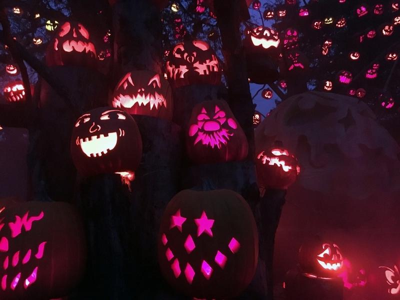 See what's on tap for Halloween 2020 in your neighborhood and nearby.