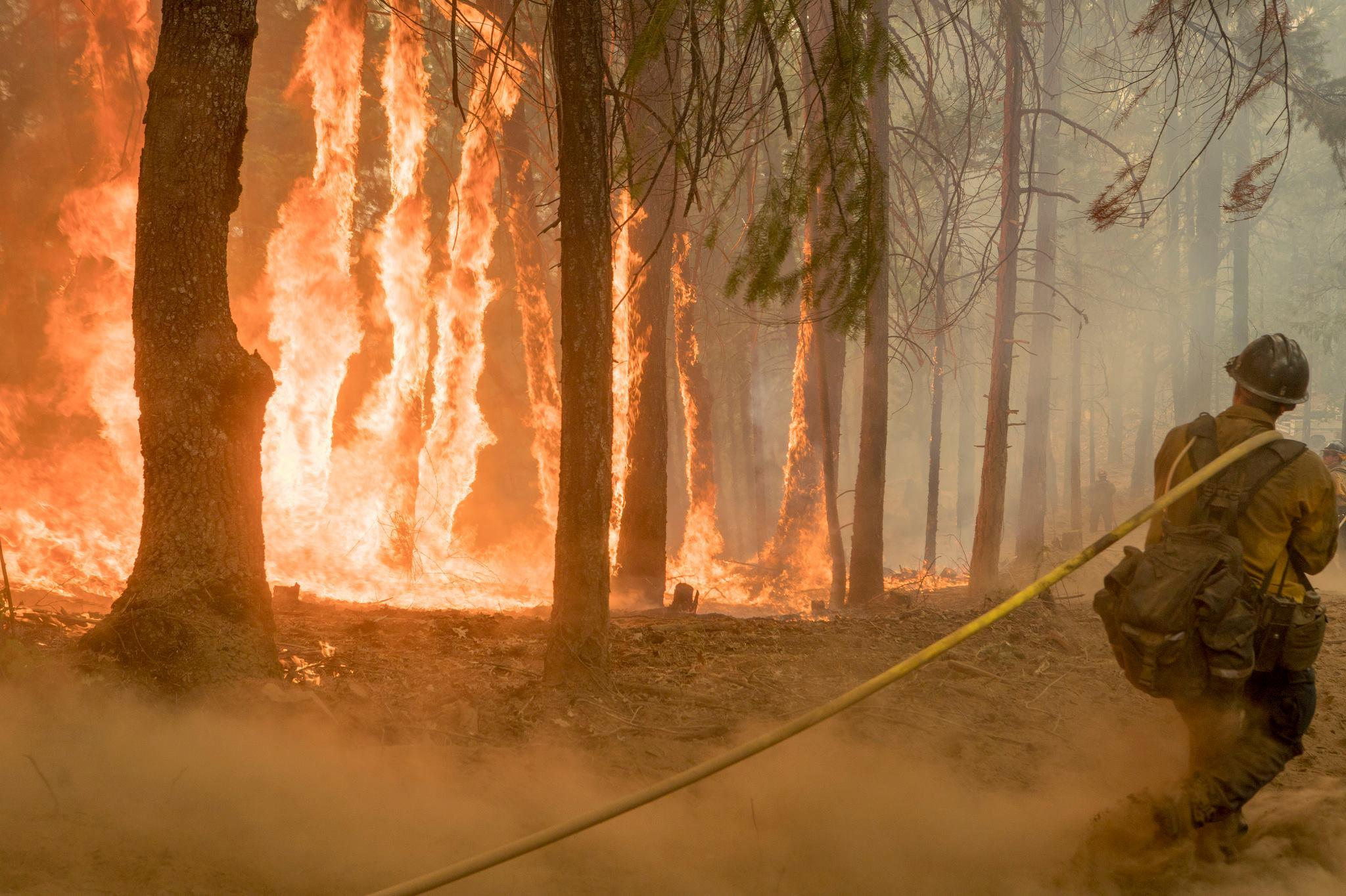 Wildfire victims among those stung by Trump's trade war