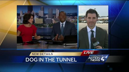 Dog found in Fort Pitt Tunnel reunited with owner