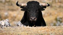 Cryptocurrency Market Surges to $365 Billion, Start of a Bull Rally?