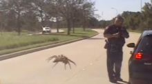 Police Dash Cam Video Shows Giant Spider Poised To Attack Traffic Cop