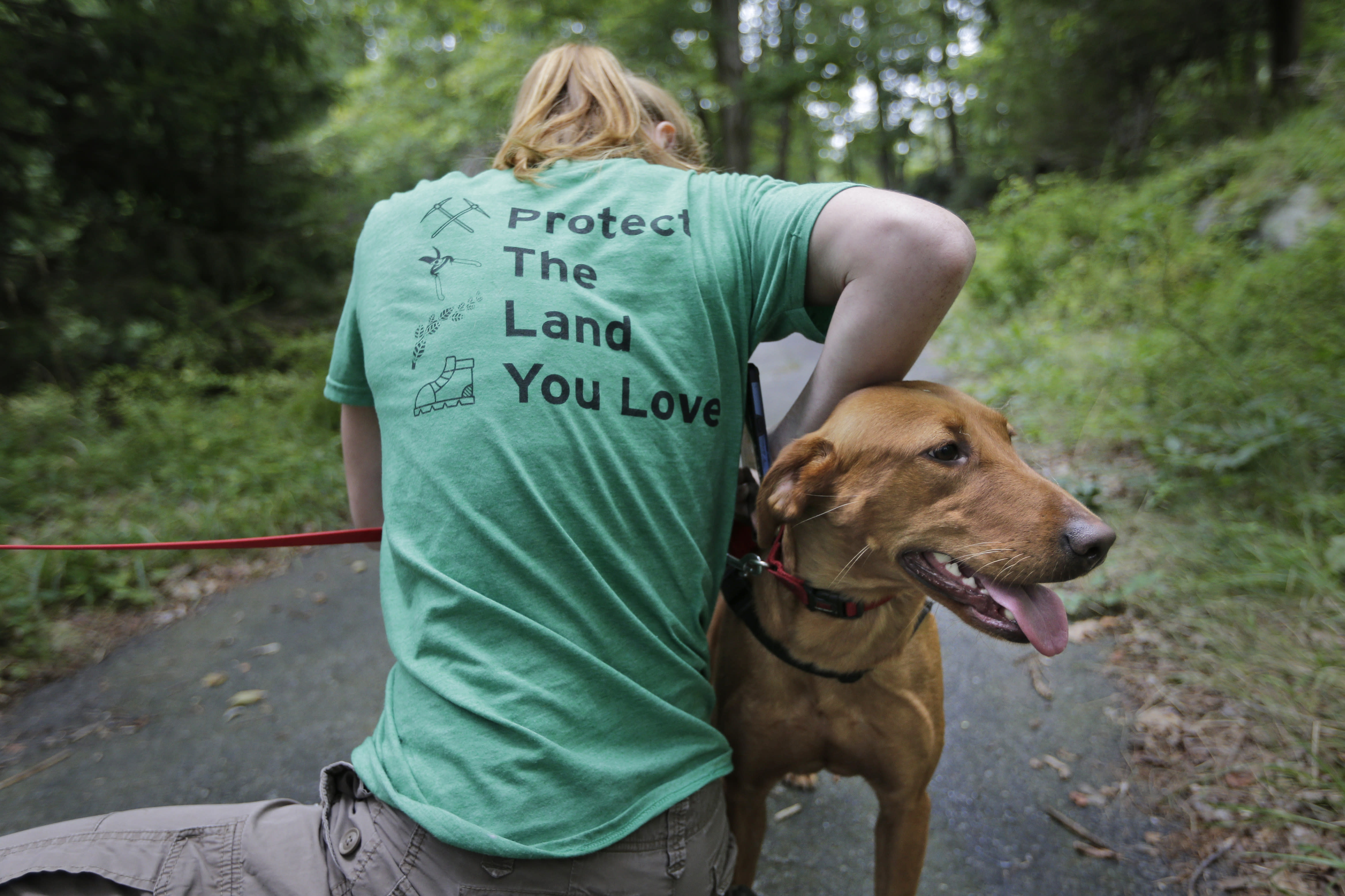 Arden Blumenthal, a NY/NJ Trails conference intern, puts a GPS in Dia's dog pack in Harriman State Park in Tuxedo, N.Y., Tuesday, Aug. 6, 2019. The nonprofit New York-New Jersey Trail Conference has trained Dia to find Scotch broom plants in two state parks 50 miles (80 kilometers) north of New York City. The invasive shrub is widespread in the Pacific Northwest but new to New York, and land managers hope to eradicate it before it gets established. (AP Photo/Seth Wenig)