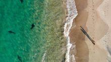 Drohnenfoto: Vater sieht Hai und rettet seine Kinder